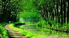 Ensemble, replantons le canal du Midi !