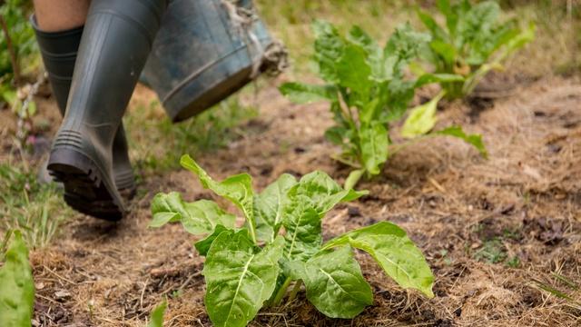 Jardins d'à Côté : semons nos premières graines
