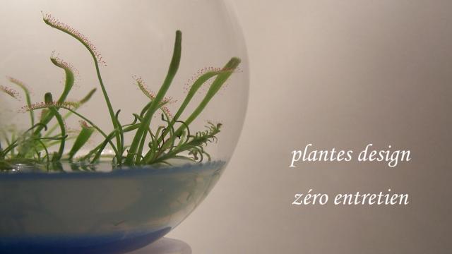 phytophore plantes en bulle ulule. Black Bedroom Furniture Sets. Home Design Ideas